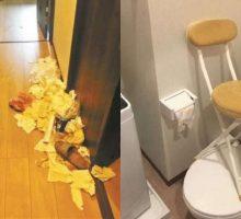 Sewa Apartemen, Tiga Turis Wanita buat Pemilik Geram, Tinggalkan Banyak Sampah dan Makanan Busuk